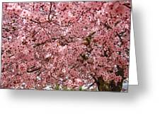 Tree Blossoms Pink Blossoms Art Prints Giclee Flower Landscape Artwork Greeting Card