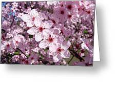 Tree Blossoms Pink Spring Flowering Trees Baslee Troutman Greeting Card