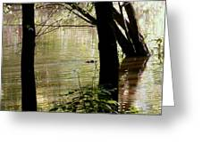 Tree Bowing To Swimming Beaver  Greeting Card