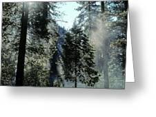 Tree Breath Greeting Card