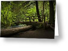 Tree Bridge Greeting Card