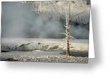 Tree By The Thermal - Yellowstone Greeting Card
