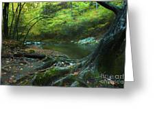 Tree By Water Greeting Card