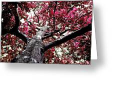 Tree Canopy Red Greeting Card