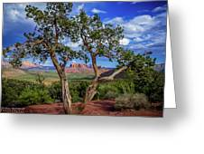 Tree Captures Sedona Greeting Card