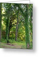 Tree Cathedral 2 Greeting Card