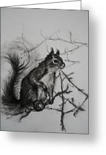 Tree Climbing Pro. Greeting Card