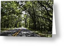 Tree Covered Road Greeting Card