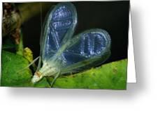 Tree Cricket Greeting Card