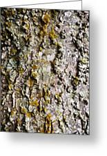 Tree Trunk Detail Greeting Card