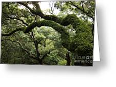 Tree Drama Greeting Card