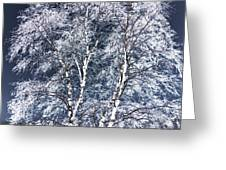 Tree Fantasy 14 Greeting Card
