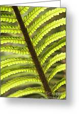 Tree Fern Frond Greeting Card