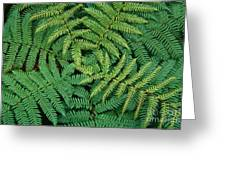 Tree Fern Fronds Greeting Card