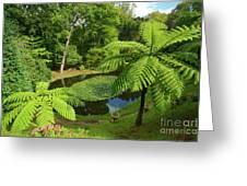 Tree Ferns Greeting Card by Gaspar Avila