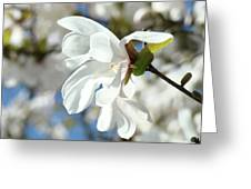 Tree Floral Garden White Magnolia Greeting Card