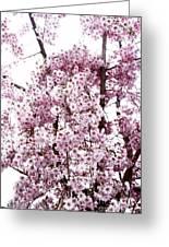 Tree Flowering In Spring Greeting Card