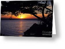Tree Framing Seascape Sunset Greeting Card by Ali ONeal - Printscapes
