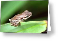 Tree Frog Close-up 01110 Greeting Card
