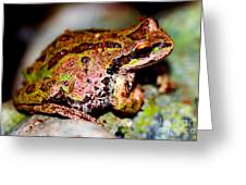 Tree Frog Close Up Greeting Card by Nick Gustafson