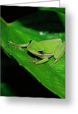 Tree Frog On Hibiscus Leaf Greeting Card