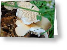 Tree Fungus Greeting Card