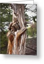 Tree Gnarl Greeting Card