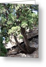 Tree Growing Through Wall Greeting Card