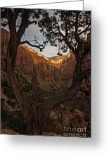 Tree Heart Greeting Card