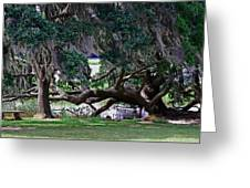 Tree Horizontal Greeting Card by Steavon Horne