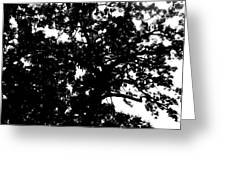 Tree In Black And White Greeting Card
