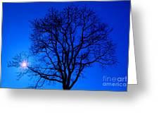 Tree In Blue Sky Greeting Card