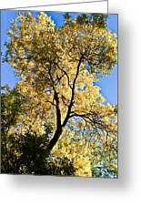 Tree In Fall Greeting Card