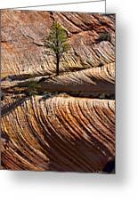 Tree In Flowing Rock Greeting Card