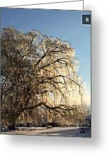 Tree In Ice Greeting Card