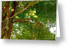 Tree In Late Summer Greeting Card