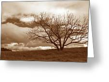 Tree In Storm Greeting Card