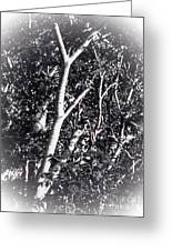 Tree In Summer In Black And White Greeting Card
