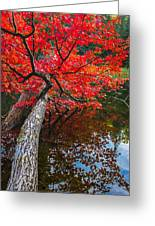 Tree In The Pond Greeting Card