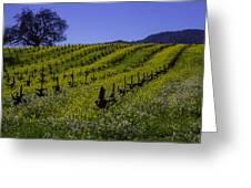 Tree  In Vineyards Greeting Card