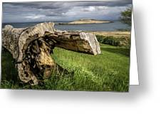 Dead Tree Laying In Front Of A Lake Greeting Card