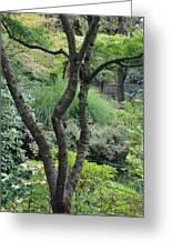 Tree Japanese Garden Greeting Card