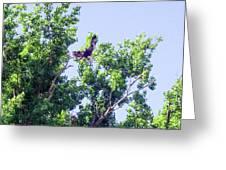 Tree Landing Greeting Card