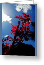 Tree Leaves Red 061814a Greeting Card