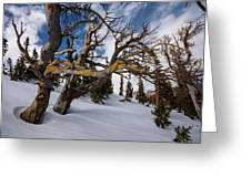 Tree Life In Winter Greeting Card