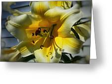 Tree Lily Greeting Card