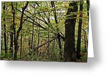 Tree Limbs Greeting Card