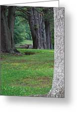Tree Line Greeting Card
