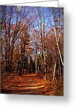 Tree Lined Path Greeting Card