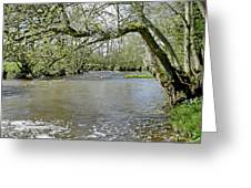 Tree-lined - Swollen River Dove At Thorpe Greeting Card